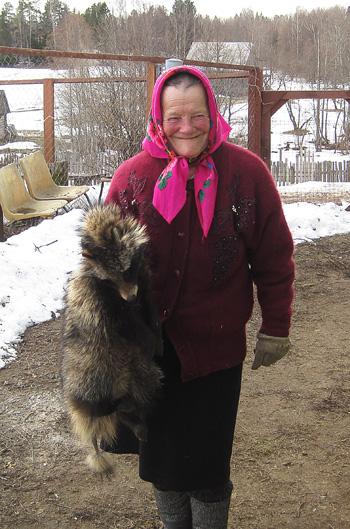 Антонина Дмитриевна Шеварденкова, п.Рунский Ну и классная охота: добыла бабушка енота!  Этот будет шестой по счету
